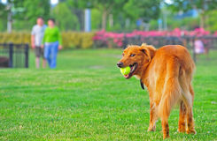 Dog my ball Stock Image