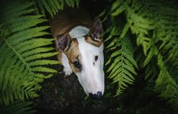 A dog in a mysterious forest stock photo