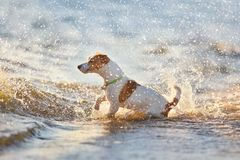 Dog n spray of water Stock Photos