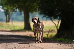 Dog without name. Walking in beautifull sunny day royalty free stock image