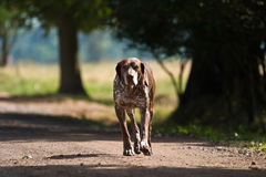 Dog without name. Walking in beautifull sunny day royalty free stock photography