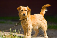 Dog without name. Walking in beautifull sunny day royalty free stock photos