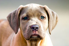 Dog without name. Walking in beautifull sunny day royalty free stock photo