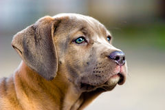 Dog without name Royalty Free Stock Images