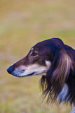 Dog without name. Walking in beautifull sunny day stock photography