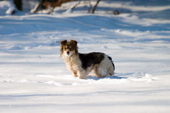 Dog without name. In snow near big forest royalty free stock photos