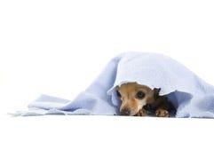 Dog nap Stock Photo
