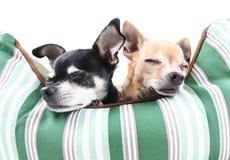Dog nap (focus on tan dog) Stock Photography