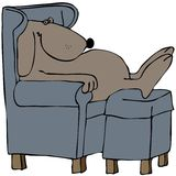 Dog napping in a chair Stock Image