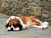Dog napping outdoors