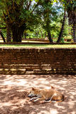 A dog napping in the shade of some trees away from the midday su Royalty Free Stock Image