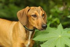 Dog Nature royalty free stock photo