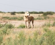Dog on the nature stock photography