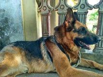 Dog. Nature  pet self explore Royalty Free Stock Image