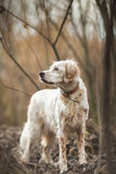 Dog in nature portrait Stock Images