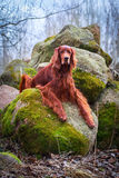 Dog. In nature at spring Stock Photo
