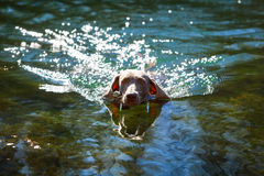Dog. In nature at summer Royalty Free Stock Photos