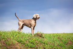 Dog. In nature at summer Stock Image