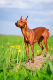 Dog. In nature at summer Royalty Free Stock Images