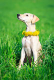 Dog Royalty Free Stock Photos