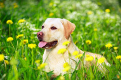 Dog Stock Images