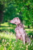 Dog. In nature at summer Stock Photography