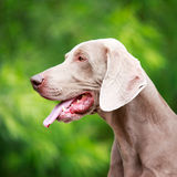 Dog. In nature at summer Stock Images