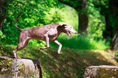 Dog. In nature at summer Royalty Free Stock Image