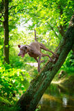 Dog. In nature at summer Stock Photo