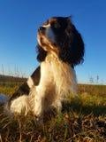 Dog at nature. Nature, dog, sun Royalty Free Stock Image