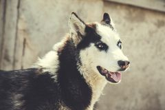 Dog in nature. White and black dog in the  nature stock photos