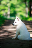 Dog on nature Stock Images