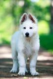 Dog on nature Stock Photography