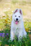 Dog on nature Stock Image