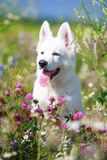 Dog on nature Royalty Free Stock Photos
