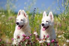 Dog on nature Royalty Free Stock Image