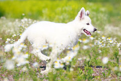 Dog on nature Royalty Free Stock Photo