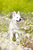 Dog on nature Stock Photography