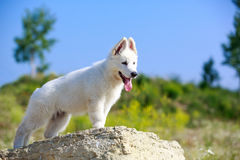 Dog on nature Stock Photos
