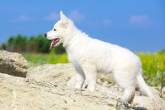 Dog on nature Royalty Free Stock Photography