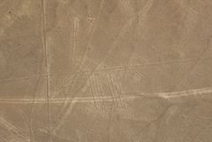 Dog, Nazca lines Stock Photography