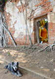 Dog near ancient ruin Buddhist church Royalty Free Stock Photos