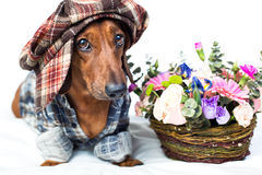 Dog near with bouquet of flowers Stock Image