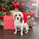 Dog near christmas tree stock photography