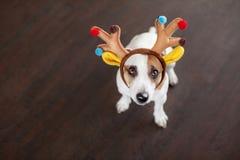 Dog near christmas tree royalty free stock photography