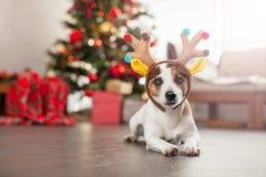Dog near christmas tree stock image