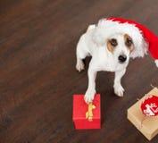 Dog near christmas tree stock images