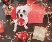 Dog near christmas tree stock photos
