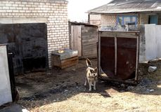 Dog near the garage Royalty Free Stock Image