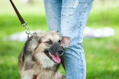 Dog near his owner on blurry green background Stock Images